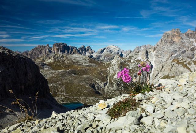 Alpská flora. Autor: Lukáš Budínský (foto.lukasx.cz), Fotoaparát: DSC-RX100, Objektiv: 28-100mm F1.8-4.9