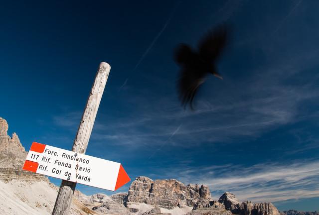 Alpský havran. Autor: Lukáš Budínský (foto.lukasx.cz), Fotoaparát: Canon EOS 70D, Objektiv: 17-50mm