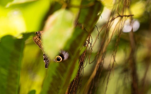 Motýli ve skleníku Fata Morgana, Lukáš Budínský (foto.lukasx.cz), Canon EOS 70D, EF100mm f/2.8L Macro IS USM