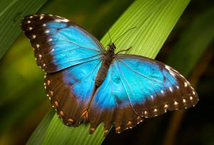 Motýli ve skleníku Fatamorgana, Lukáš Budínský (foto.lukasx.cz), Canon EOS 70D, EF100mm f/2.8L Macro IS USM